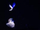 kite18NKB_09